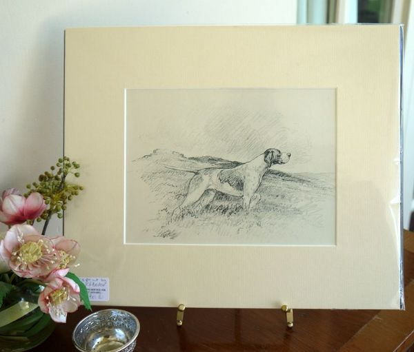 English Pointer - Poi B1 - 1940's print by K F Barker